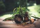 Canapa: storia di una pianta proibita